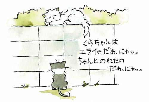 塀に乗れるネコ