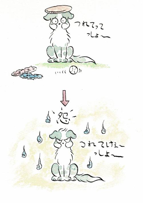 雨の日の犬っころ