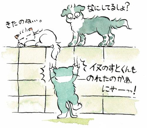 塀に登れる犬