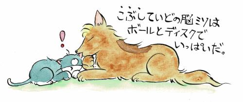 犬と猫の会議