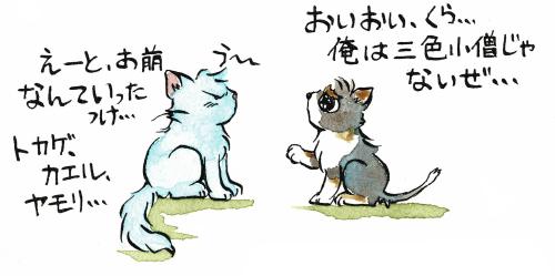 トライカラーの犬は三色小僧