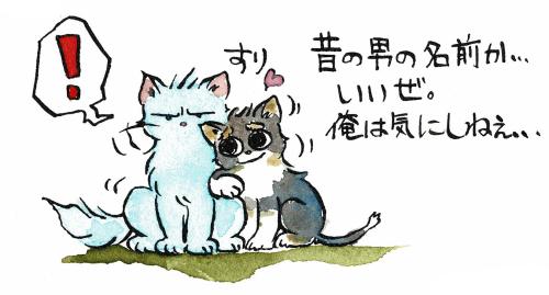猫の過去は気にしない犬