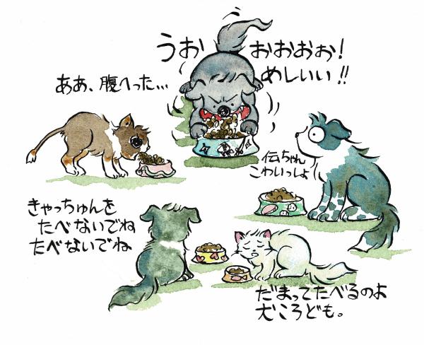 犬猫たちの食卓