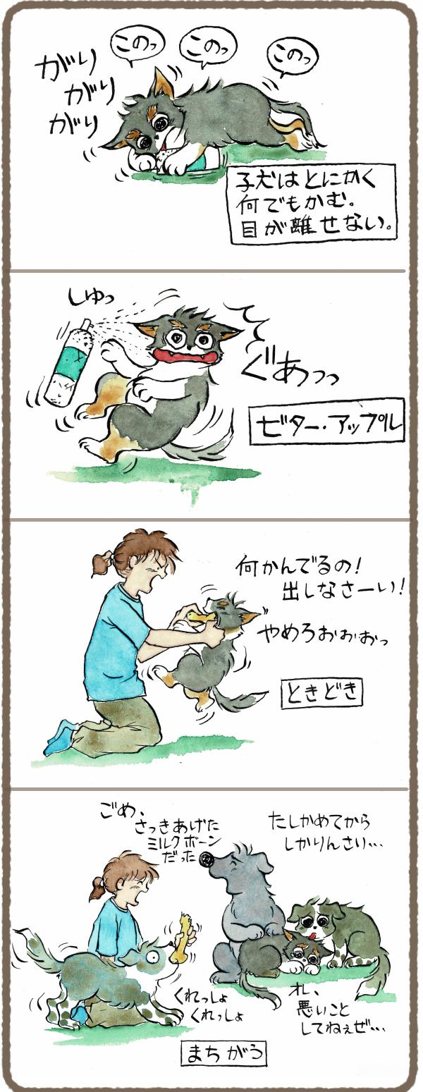 子犬はなんでも噛む