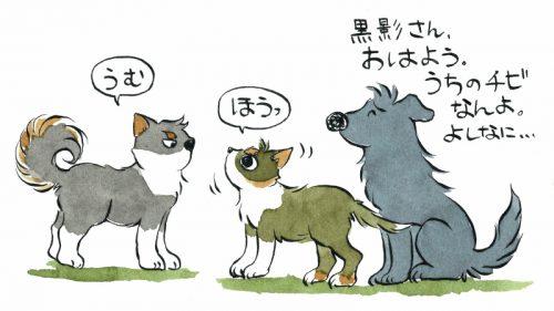 犬のルール