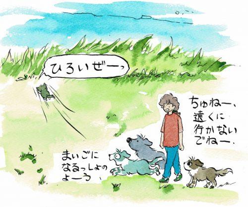 広いところで犬と遊ぶ