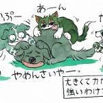 犬たち(と猫)の力関係